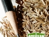 ami_seeds_grasses_annual_rye_grass-4397